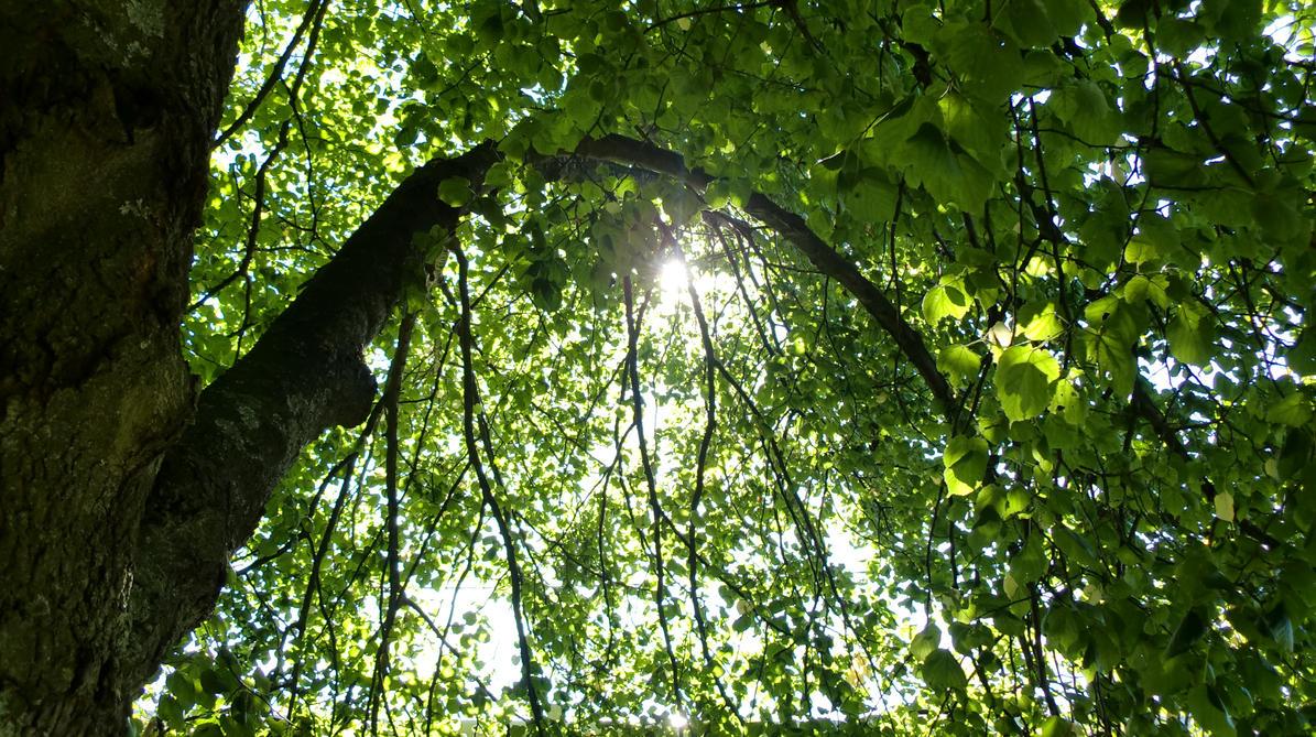 sunlight through trees black - photo #42