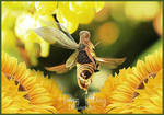 Little Queen Bee by HayzPaling