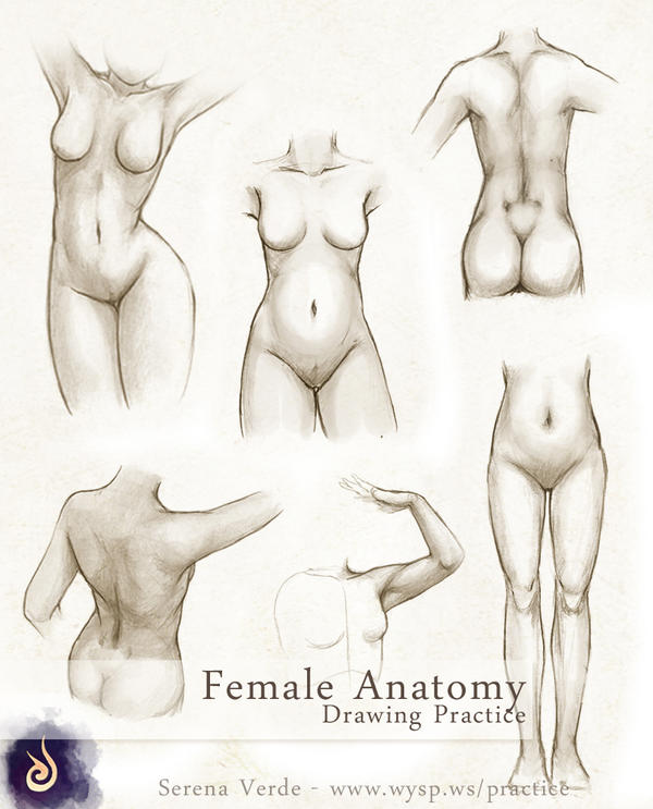 Female Anatomy Drawing Practice by SerenaVerdeArt on DeviantArt