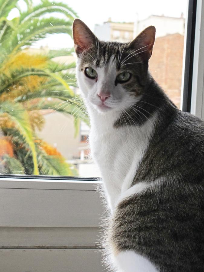 Cat by PBorras