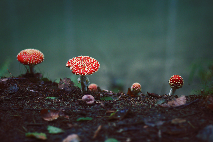 'shrooms by passingbird