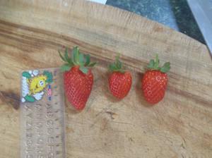 Strawerries Picked