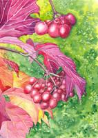 Red viburnum by Shiaty