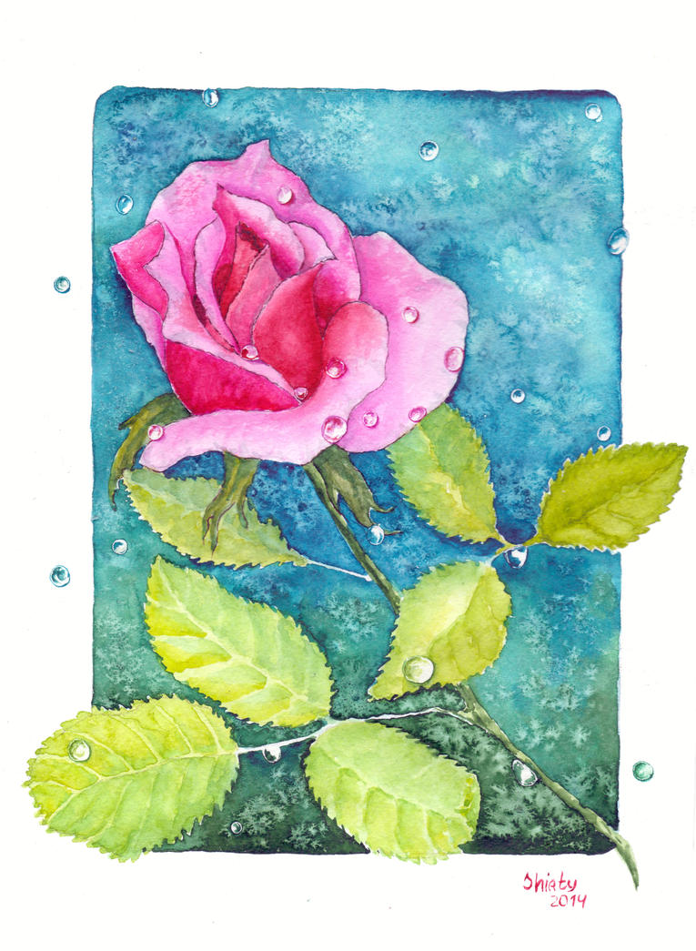 Rose in the dew 4 by Shiaty