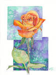 Rose in the dew 5
