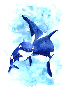 Mother and baby killer whale