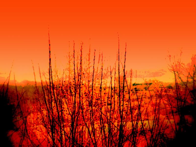 orange sky by lorenSimon