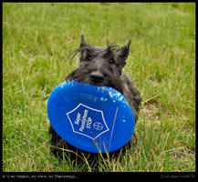 My frisbee, my own...