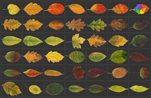 High resolution leaves pictures. by plaintextures