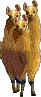 Llamarus