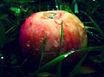 Fruits of Fall II