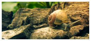 Snail on the run