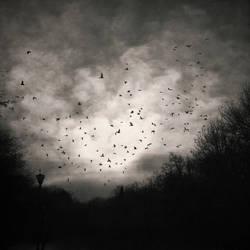 Dark Tranquility by DarkCrissus