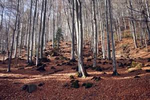 Autumn Mood 2 by DarkCrissus