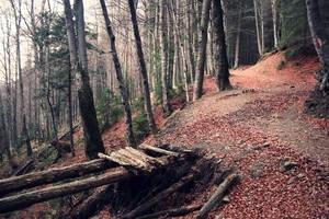Autumn Mood 3 by DarkCrissus