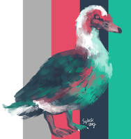Muscovy by Siplick