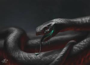 Animal Studies_01 - Snake