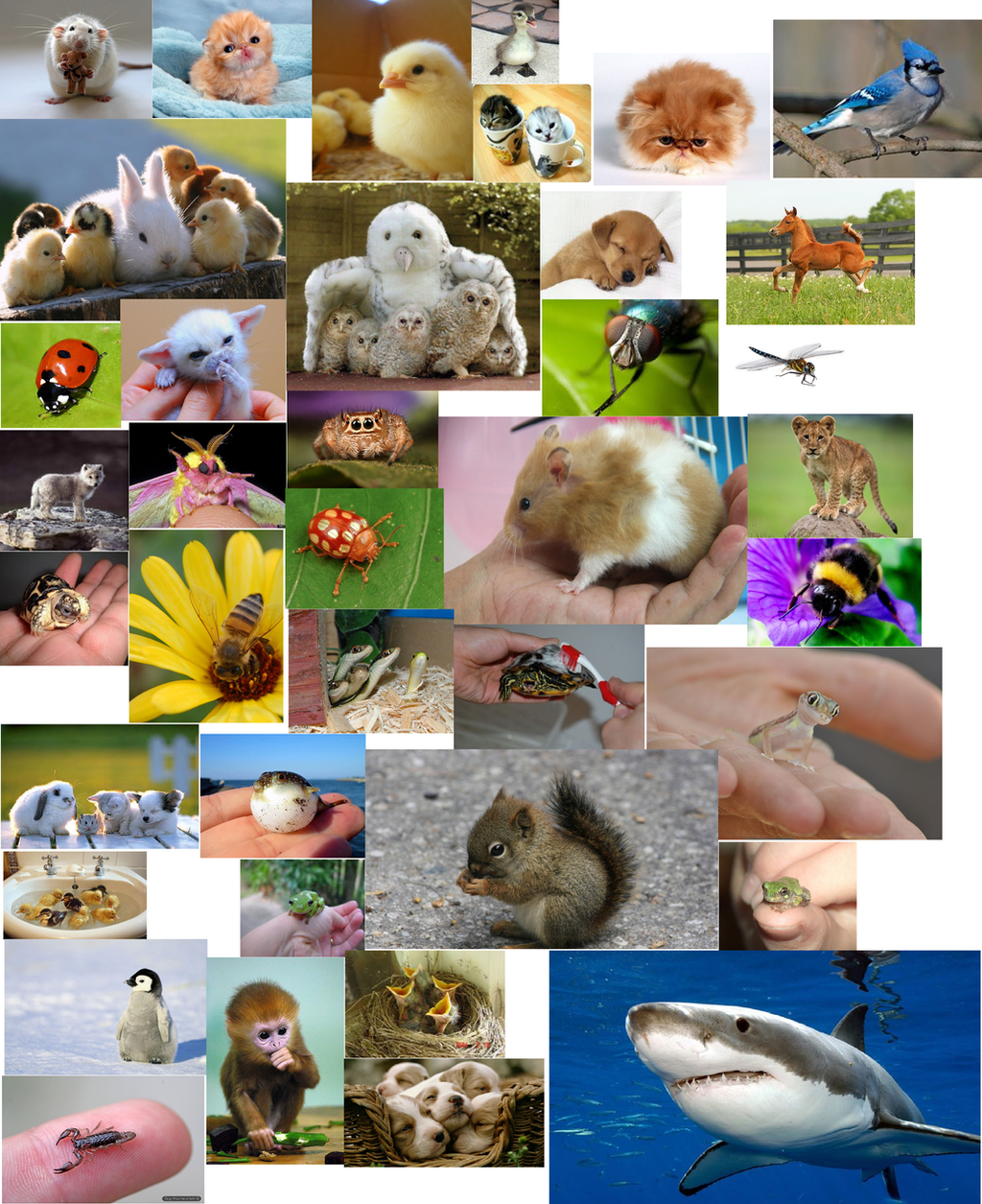 Collage Of Cute Animals By Harejules