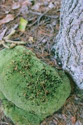 mossy by frogstring