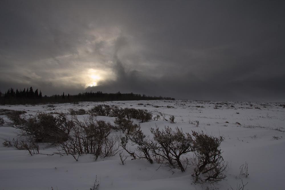 Bleak Sunrise by mofig