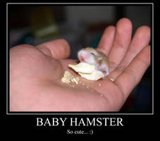 Baby Hamster MP