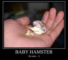 Baby Hamster MP