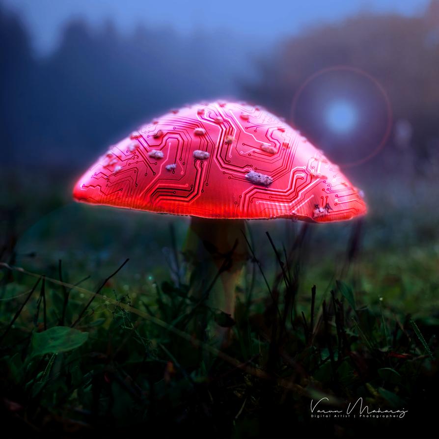 Tech Mushroom by vmaharaj