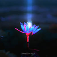 Glowing Lilly