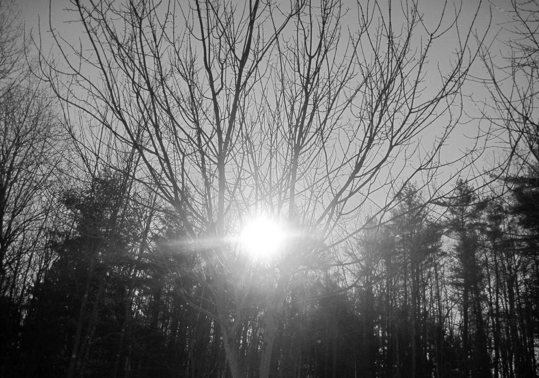 sunlight through trees black - photo #12