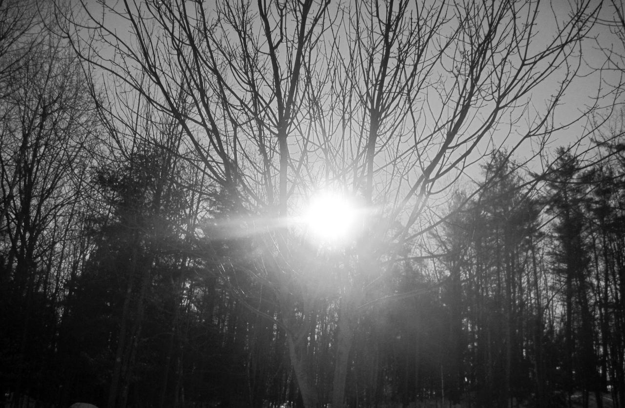 sunlight through trees black - photo #16