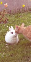Cat and rabbit by patatipatata123