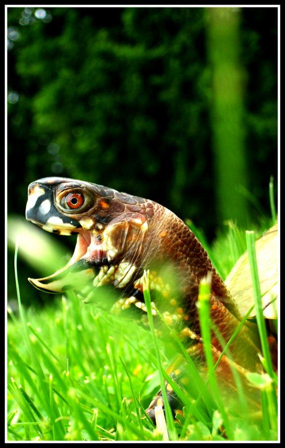 Turtles go RAWR by DimmedFaith