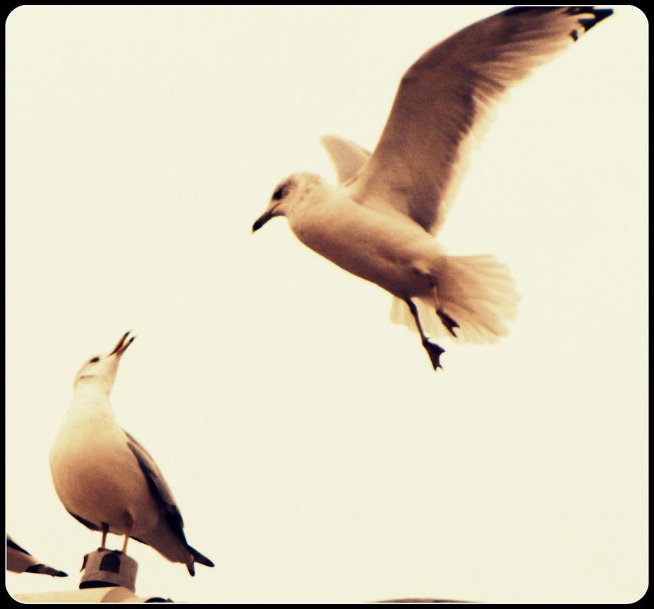 Birds by DimmedFaith