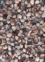 Sea shells I by DeviantMary