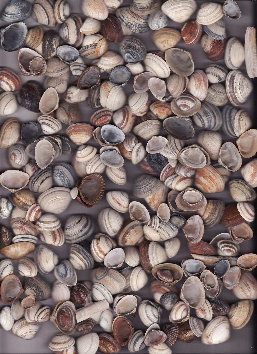 sea shells II by DeviantMary