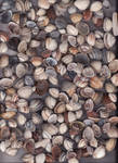 sea shells II by DeviantMary