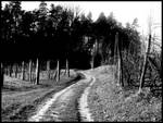 Road betwen vineyards
