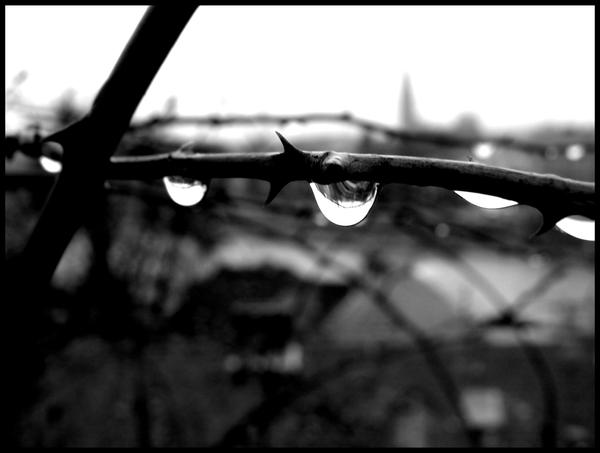 Drops on thorns