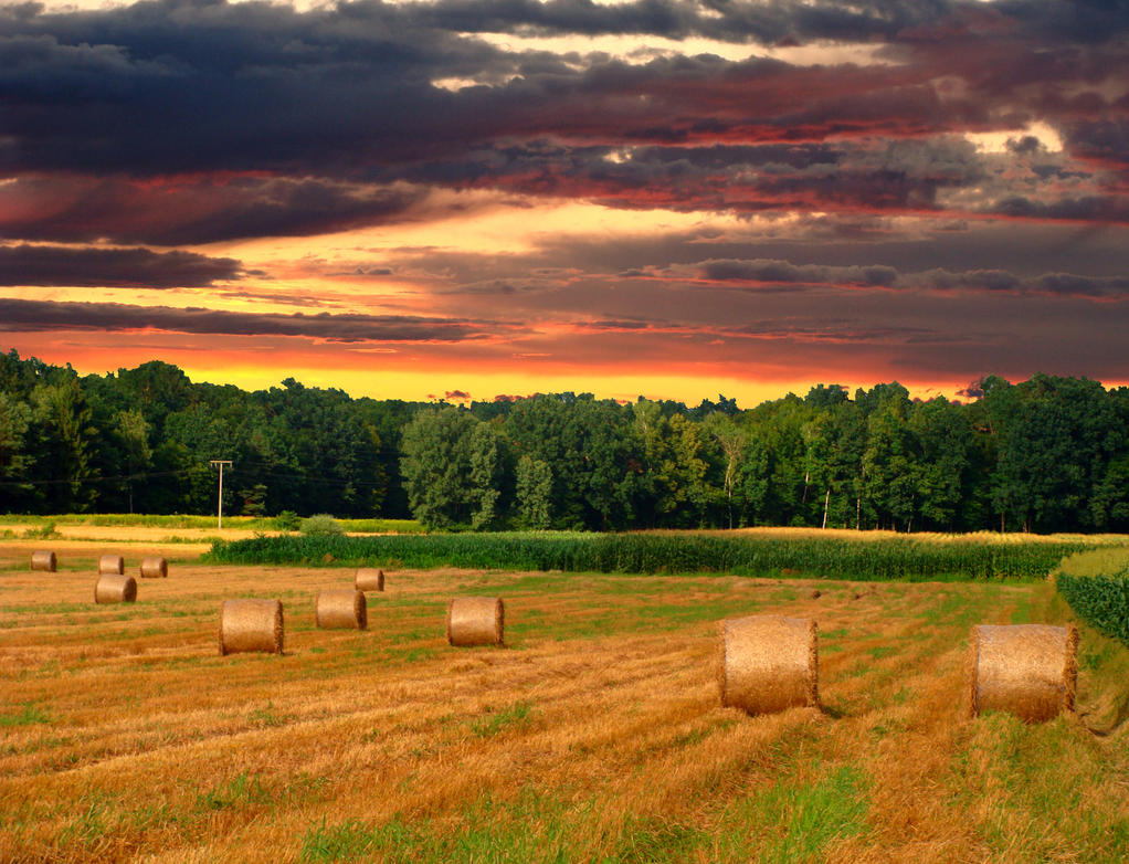 Sunset on a field by niwaj
