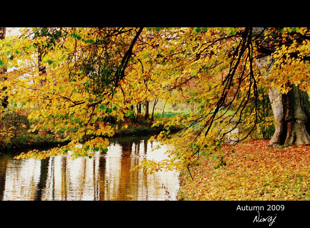 Autumn colours by niwaj