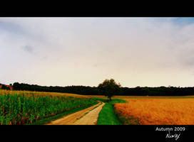 Road to anywhere by niwaj