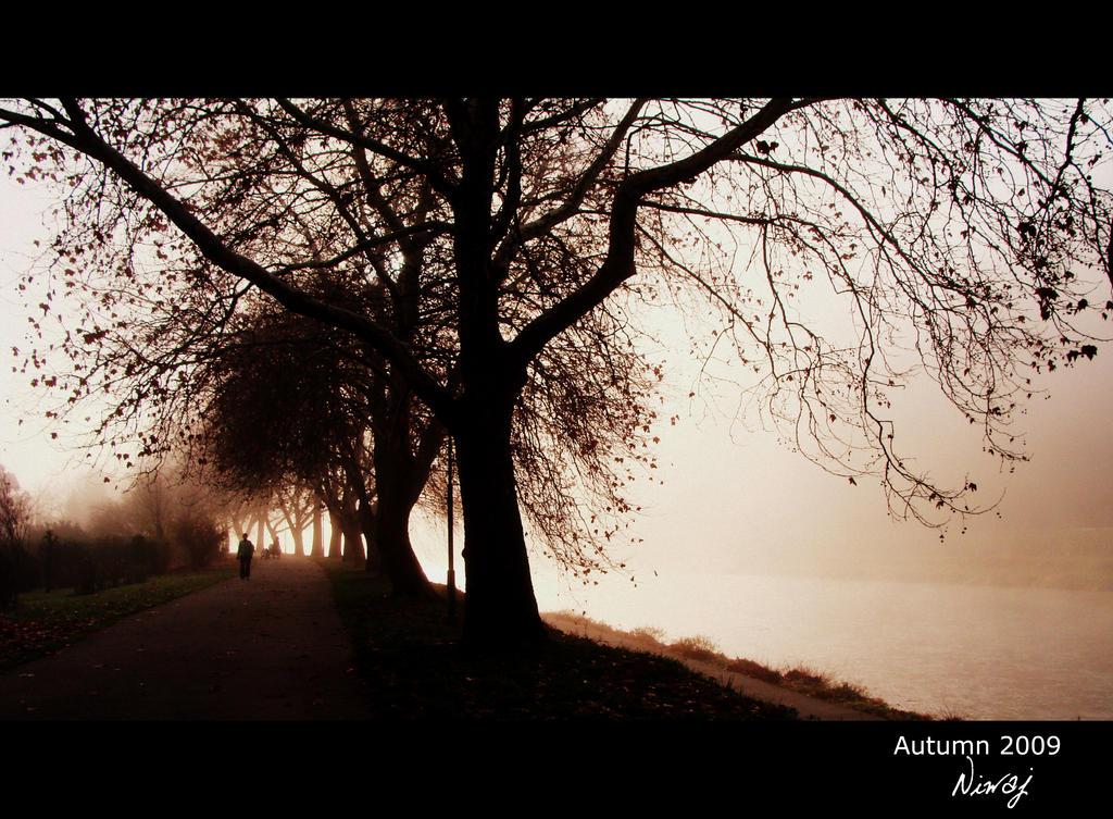 Fogy path by niwaj