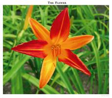 The flower by yekini