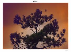 Pine by yekini