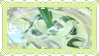 24- Green Tea
