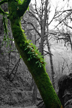 Manic Moss
