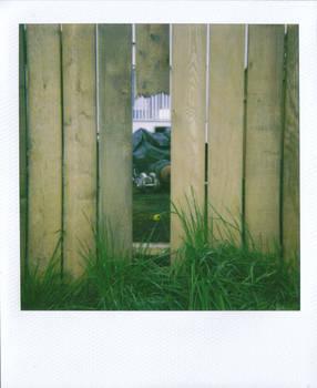 Neighbours' Yard