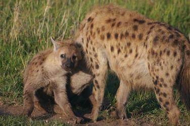 Hyenas by SleeplessStoryteller