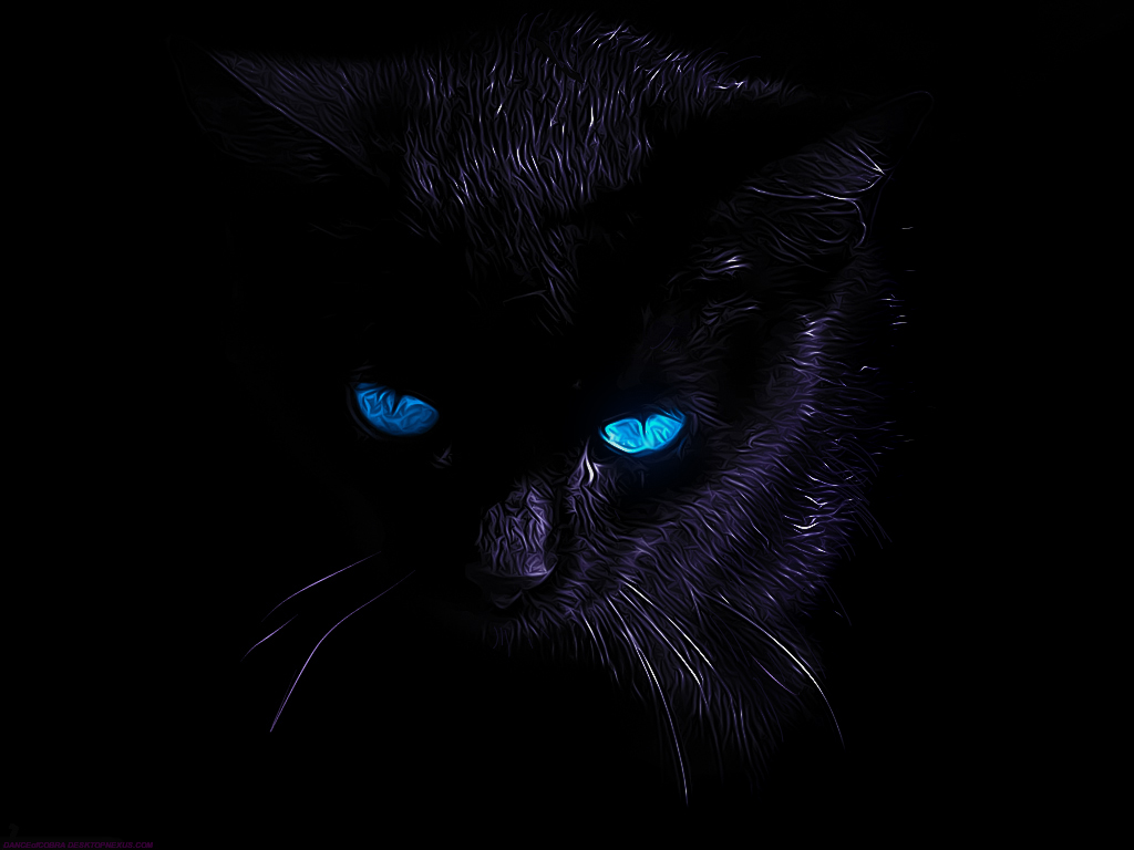 Black Cat By Dance Of Cobra On Deviantart