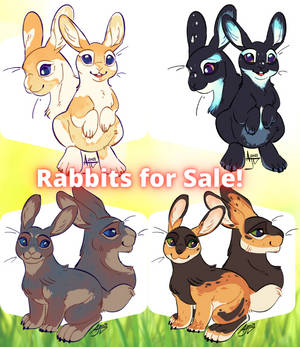 Rabbits For Sale (OPEN)